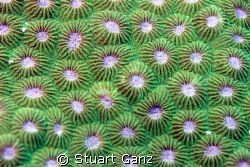 I really like the pattern of this coral. by Stuart Ganz 